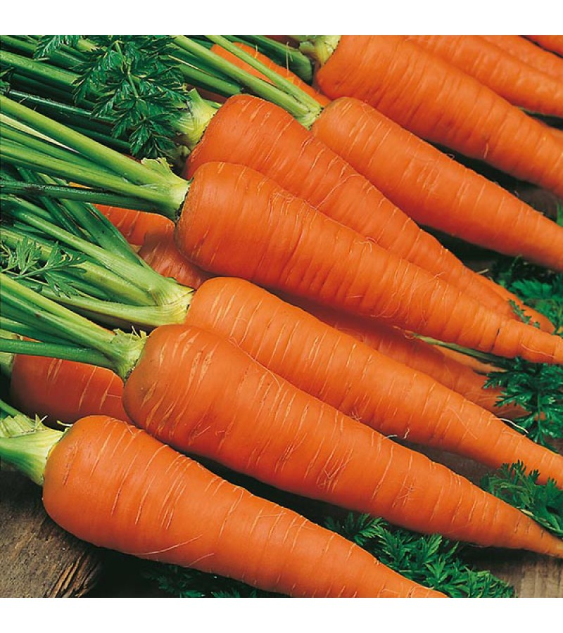 Mr Fothergill's Carrot Autumn King 2 Seeds (2000 Pack)