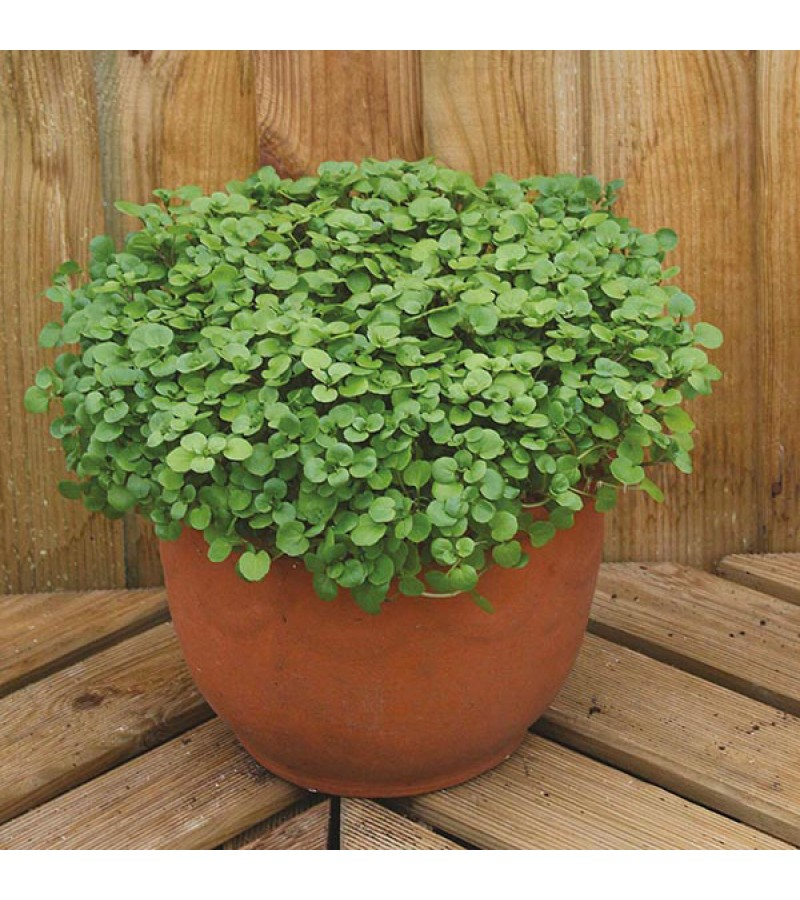 Mr Fothergill's Salad Leaves Watercress Aqua Seeds (1000 Pack)
