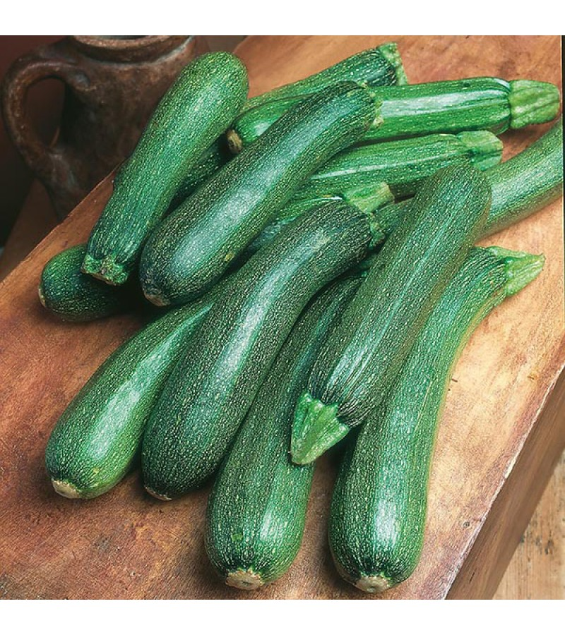Mr Fothergill's Courgette Patriot F1 Seeds (10 Pack)
