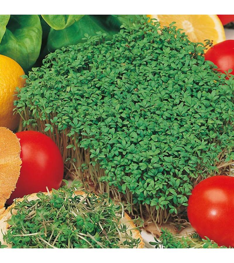 Mr Fothergill's Salad Leaves Cress Fine Curled (4000 Pack)