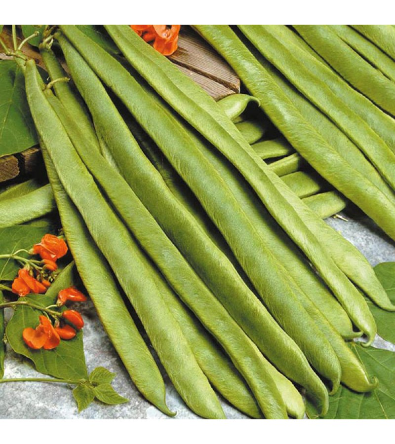 Mr Fothergill's Runner Bean Scarlet Empire Seeds