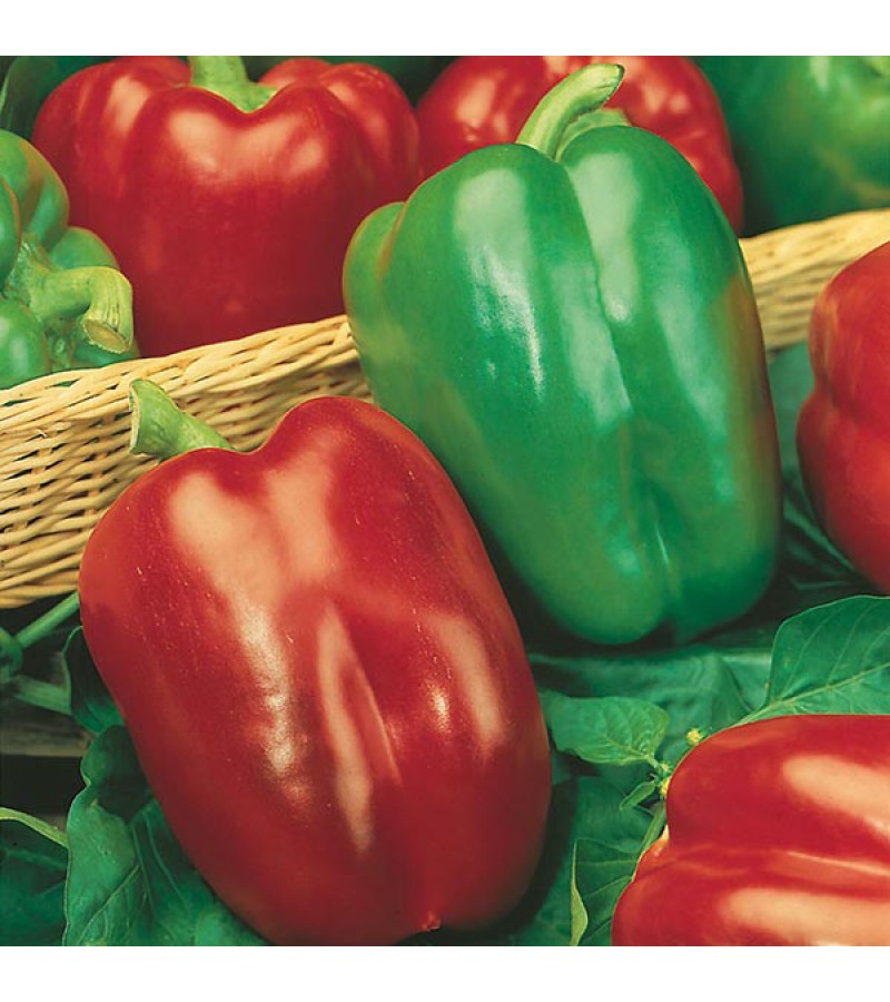 Mr Fothergill's Pepper (Sweet) Californian Wonder Seeds (150 Pack)