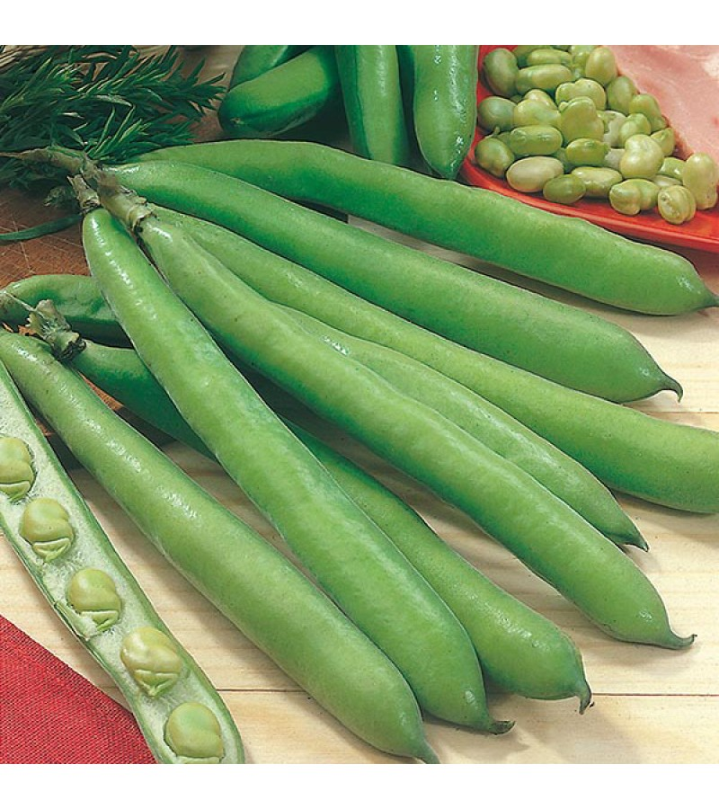 Mr Fothergill's Broad Bean Aguadulce Seeds (50 Pack)