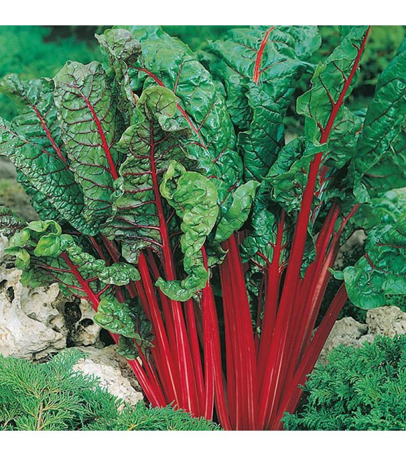 Mr Fothergill's Chard Rhubarb (Vulcan) Seeds (125 Pack)