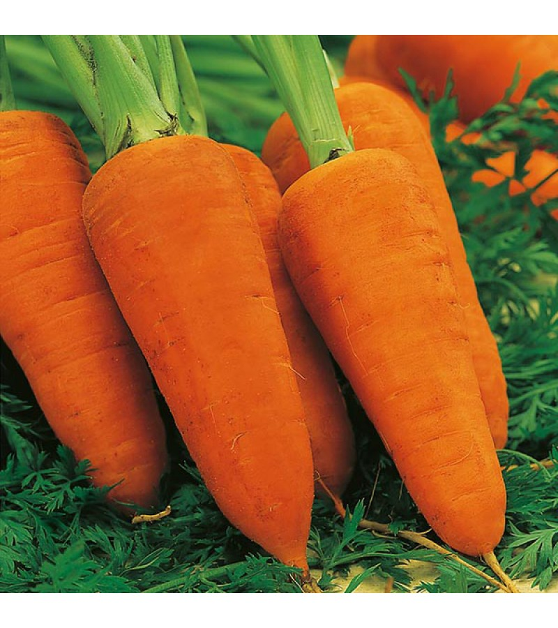 Mr Fothergill's Carrot Chanteney Red Cored 2 Seeds (2000 Pack)