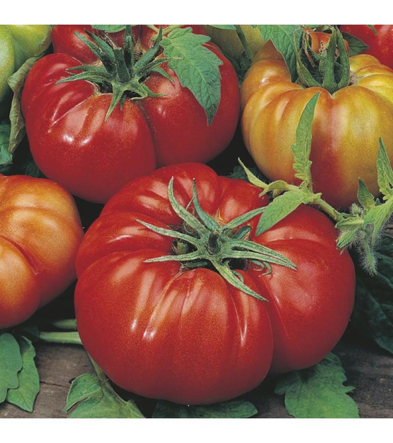 Mr Fothergill's Tomato (Beefsteak) Costoluto Fiorentino Seeds (50 Pack)