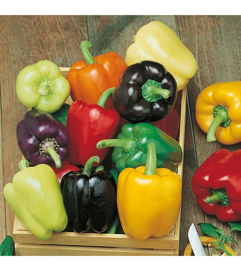 Mr Fothergill's Pepper (Sweet) Colour Spectrum (50 Pack)
