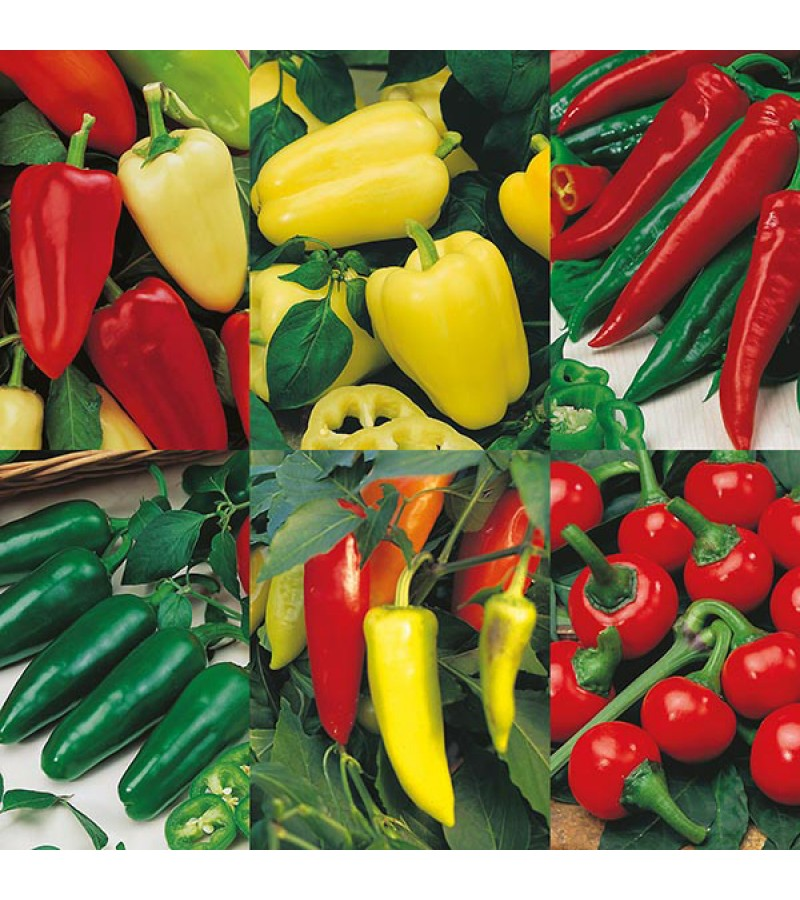 Mr Fothergill's Pepper Collection