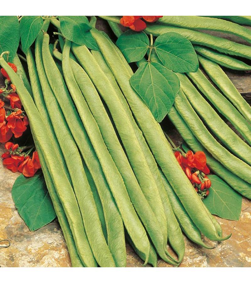 Mr Fothergill's Runner Bean Lady Di Seeds