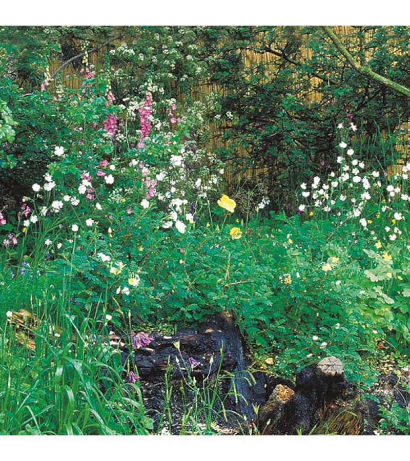 Mr Fothergill's Wildflower Hedgerow & Verges (1g Seed)