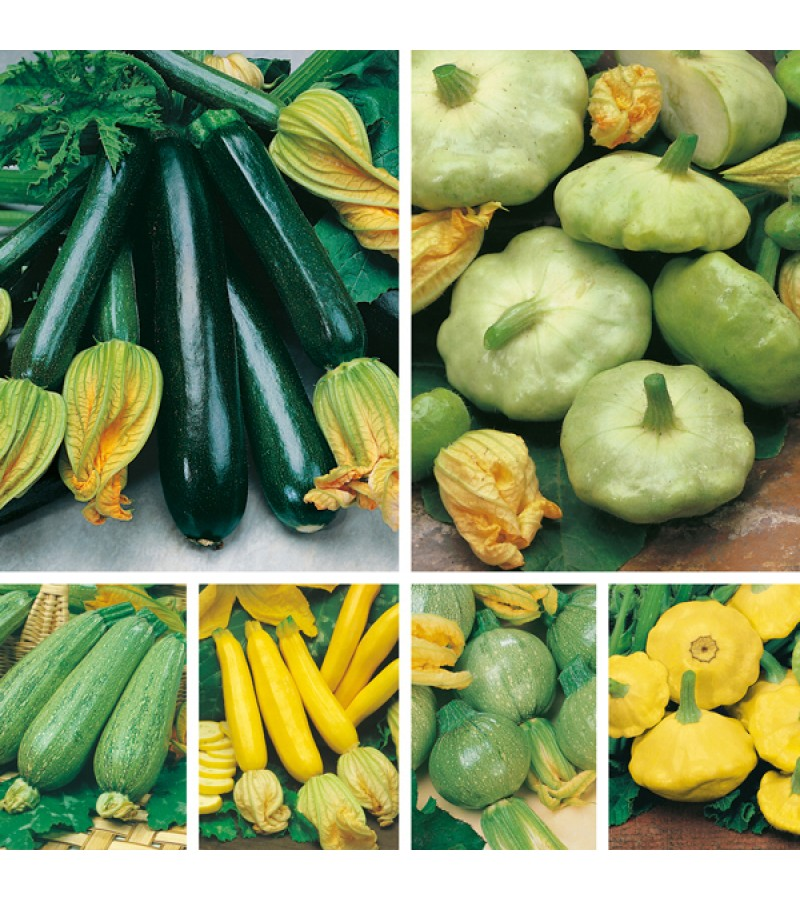 Mr Fothergill's Courgettes & Summer Squashes Seed Collection