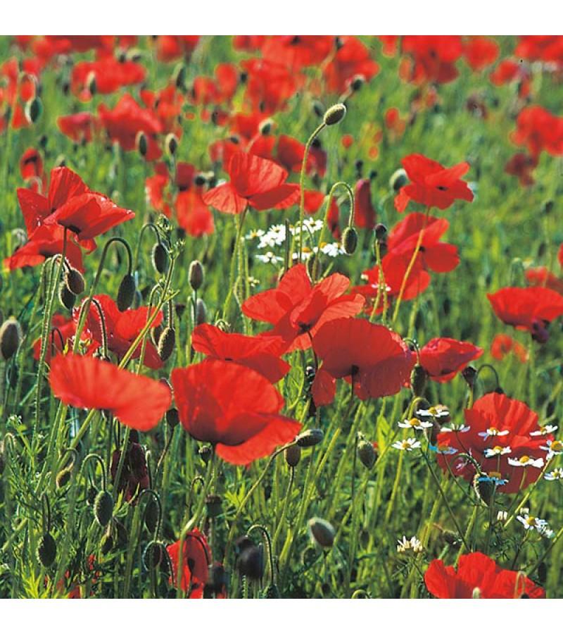 Mr Fothergill's Wild Poppy Seeds (2000 Pack)