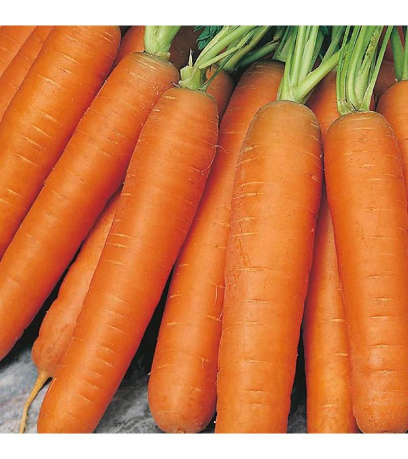 Mr Fothergill's Carrot Flyaway F1 Seeds (500 Pack)