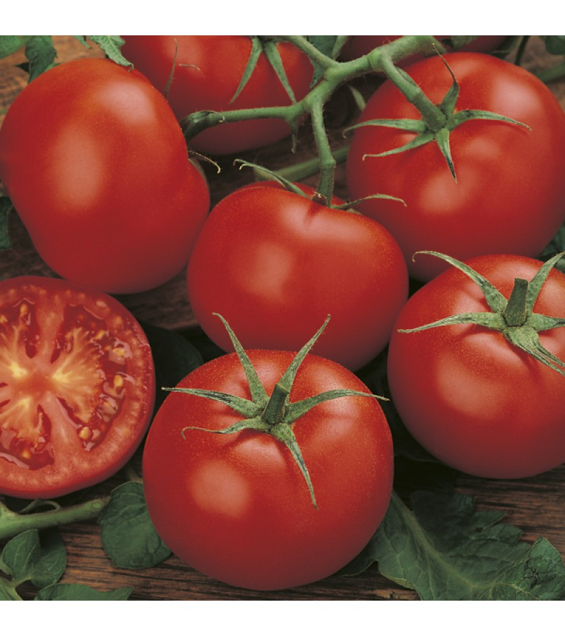 Mr Fothergill's Tomato (Standard) Moneymaker Seeds