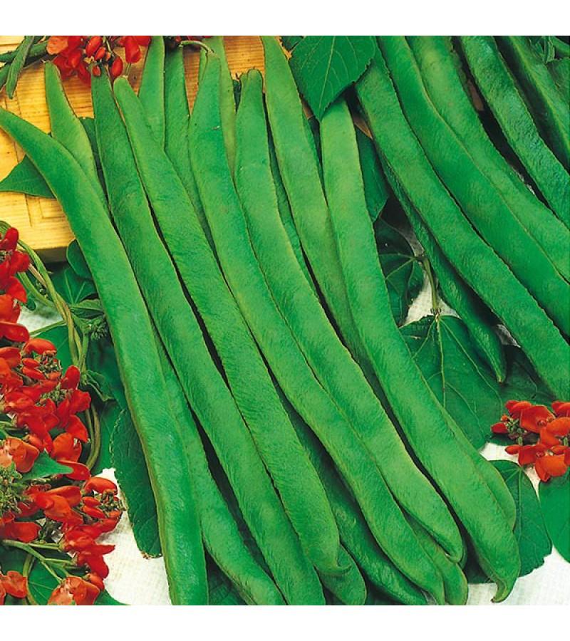 Mr Fothergill's Runner Bean Enorma Seeds (50 Pack)
