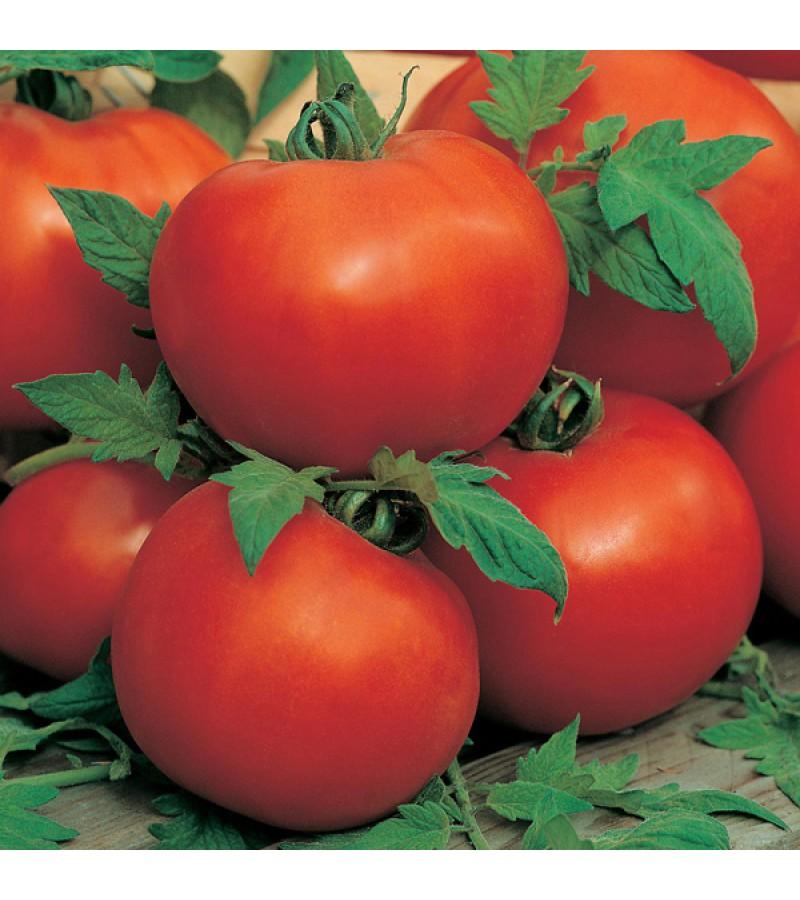 Mr Fothergill's Tomato (Standard) Ailsa Craig Seeds