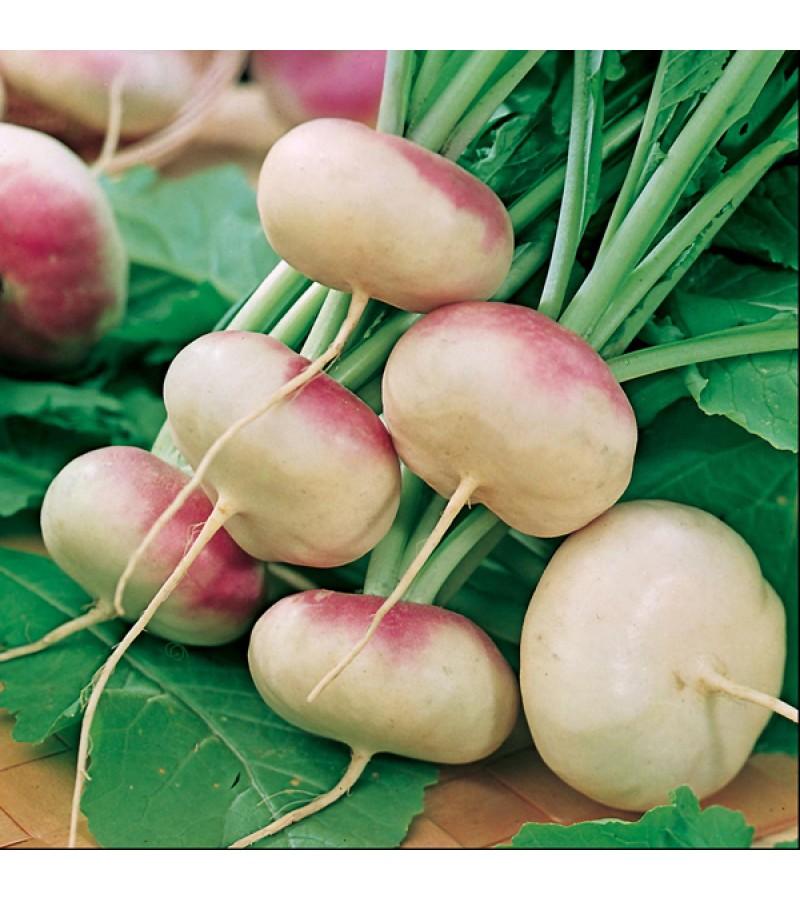 Mr Fothergill's Turnip Purple Top Milan Seeds (1750 Pack)