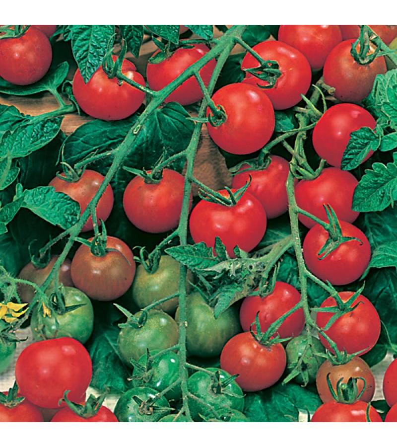 Mr Fothergill's Tomato (Cherry) Gardener's Delight Seeds (50 Pack)
