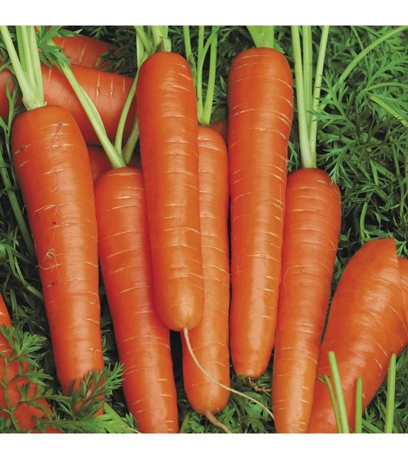 Mr Fothergill's Carrot Speedo F1 (350 Pack)