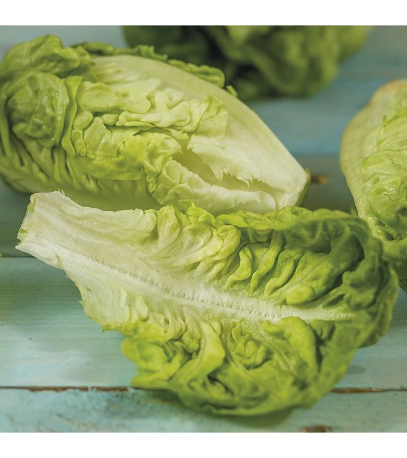 Mr Fothergill's Lettuce Thimble (200 Pack)