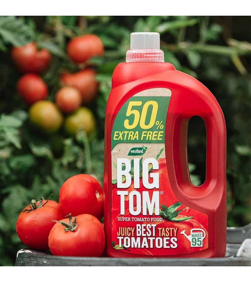 Big Tom - Tomato Food
