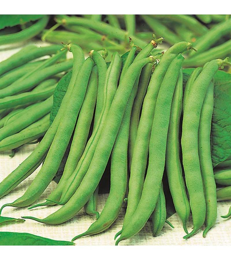 Mr Fothergill's Dwarf Bean Tendergreen Seeds (125 Seeds)