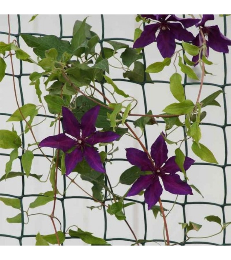 Climbing Plant and Fencing Mesh 50mm, 0.5m x 5m