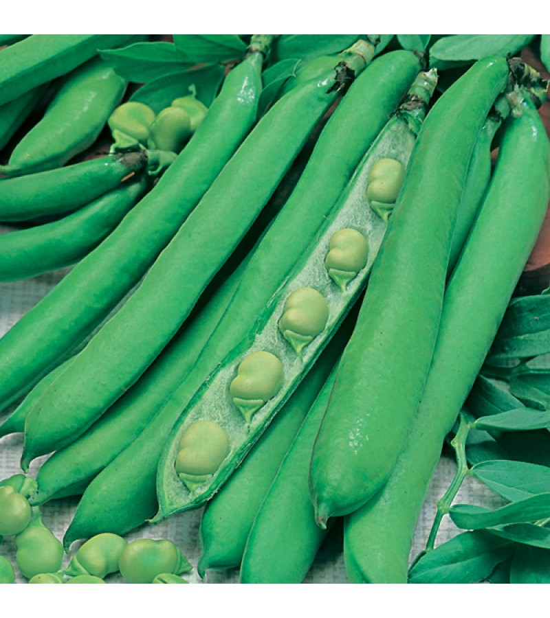 Mr Fothergill's Broad Bean Masterpiece Green Longpod Seeds (45 Pack)