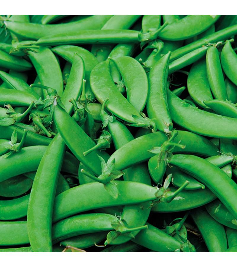Mr Fothergill's Pea (Snap) Nairobi Seeds