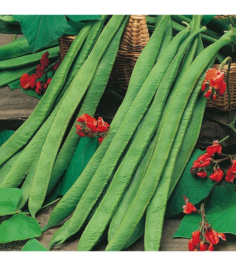 Mr Fothergill's Runner Bean Polestar Seeds (50 Pack)