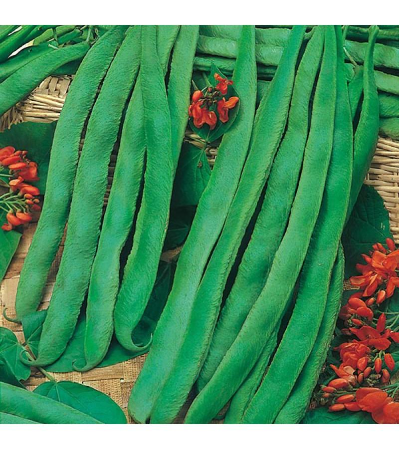 Mr Fothergill's Runner Bean Scarlet Emperor Seeds (50 Pack)