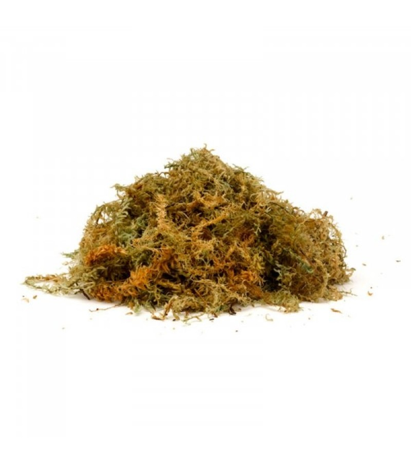 New Zealand Sphagnum Moss