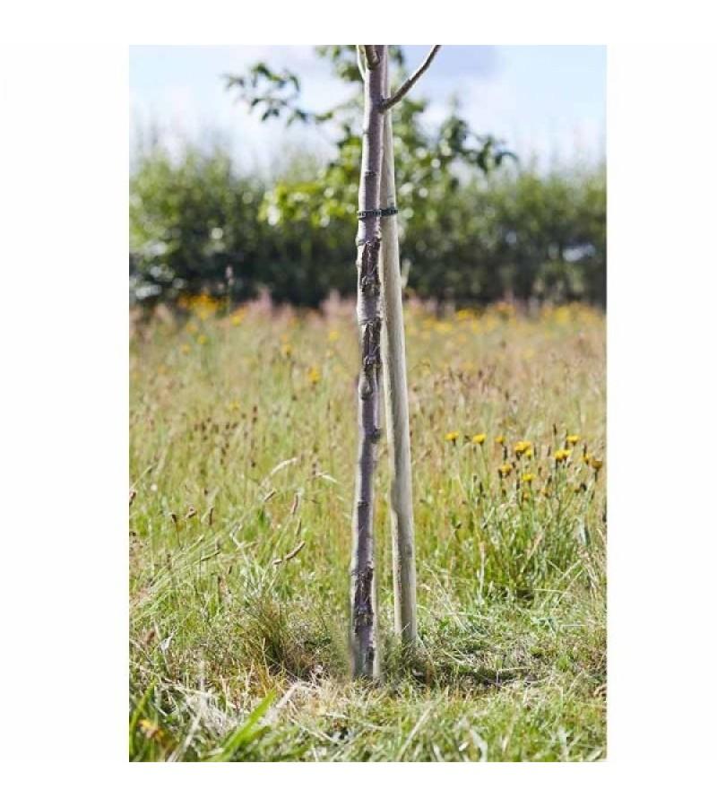 Round Tree Stake 1.8m x 40mm