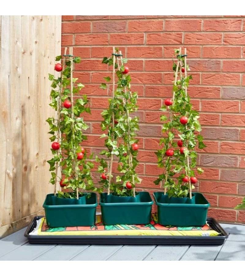Tomato Gro-Box - Triple pack