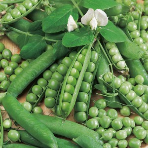 Mr Fothergill's Pea Ambassador Seeds (325 Pack)