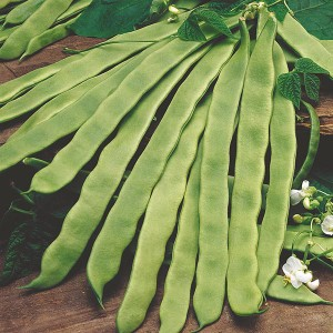 Mr Fothergill's Climbing Bean Pantheon Seeds