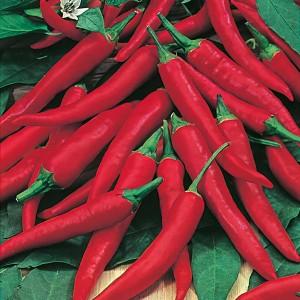 Mr Fothergill's Chilli Pepper De Cayenne (60 Pack)