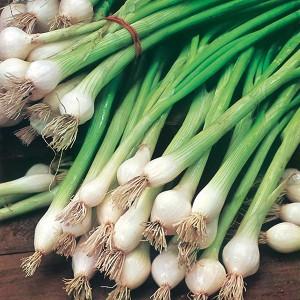 Mr Fothergill's Onion (Spring) White Lisbon Seeds (650 Pack)