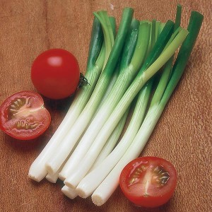 Mr Fothergill's Onion (Spring) Ramrod Seeds (500 Pack)