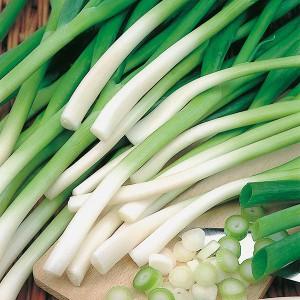 Mr Fothergill's Onion (Spring) Ishikura Seeds (500 Pack)