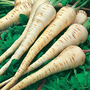 Mr Fothergill's Parsnip Tender & True Seeds (500 Pack)