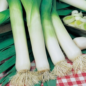 Mr Fothergill's Leek Musselburgh Seeds (500 Pack)