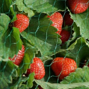 Garden Netting 15mm (4 x 10m) Green