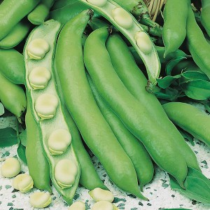 Mr Fothergill's Broad Bean Witkiem Manita Seeds (45 Pack)