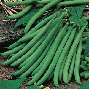Mr Fothergill's Dwarf Bean Ferrari Seeds (100 Pack)