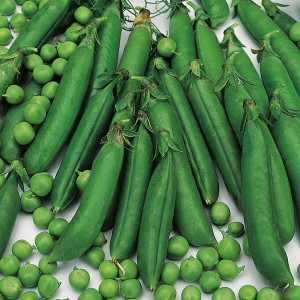 Mr Fothergill's Pea Meteor Seeds (350 Pack)