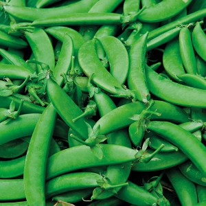 Mr Fothergill's Pea (Snap) Nairobi Seeds