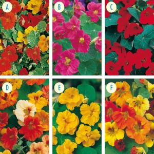 Mr Fothergill's Nasturtium Seed Collection (6 Sachets)