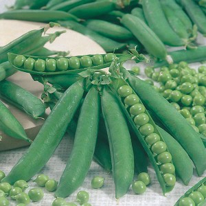 Mr Fothergill's Pea Kelvedon Wonder Seeds