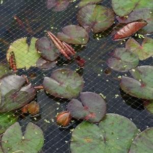 Pond & Fruit Cage Netting 12mm, 2x10m, Black